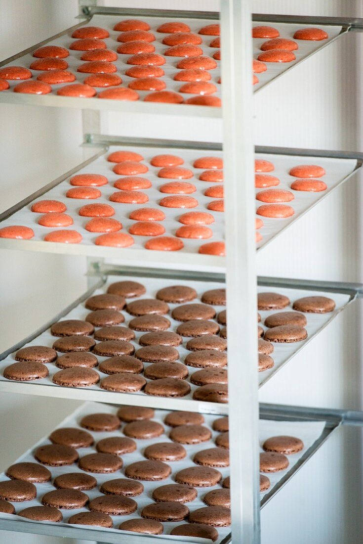 Macaroons being made: halves drying on baking trays