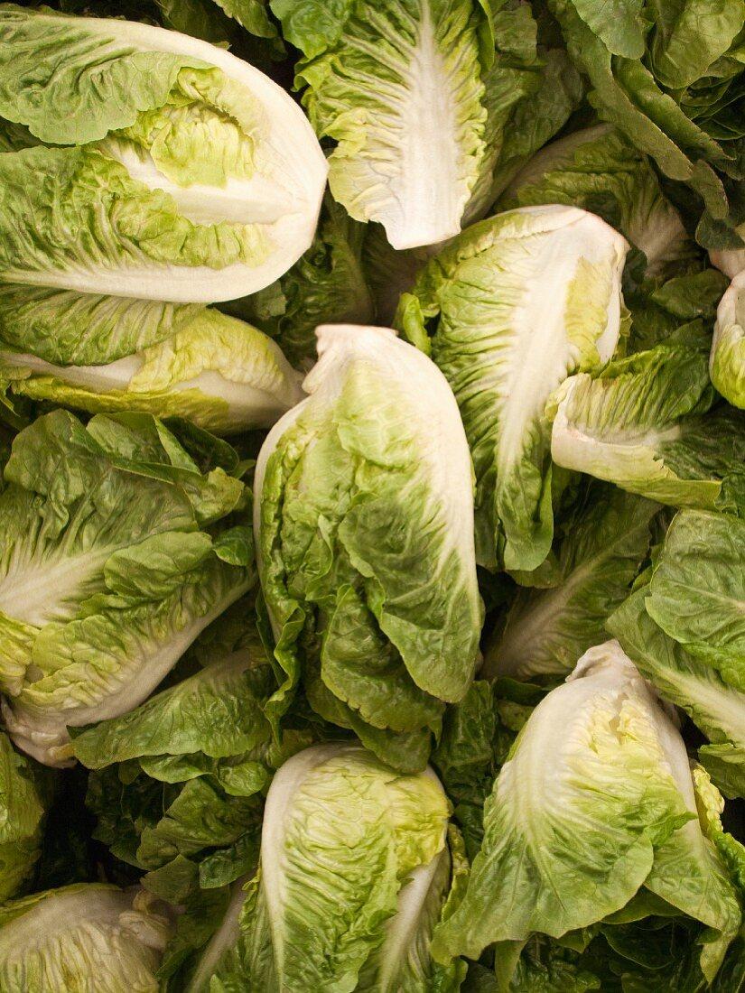 Cos lettuce (full frame)
