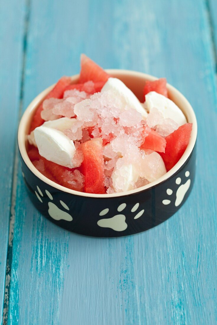 A cold treat for dogs - watermelon, frozen quark and watermelon granita