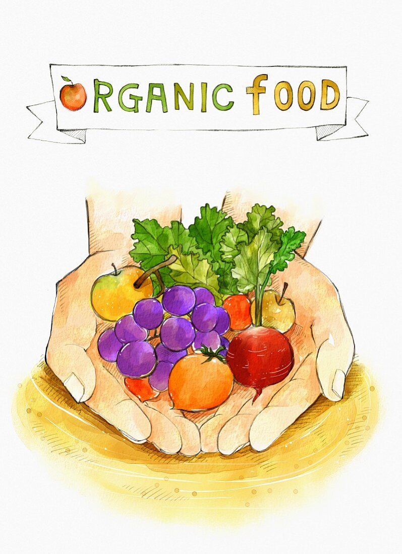 An illustration of organic food - hands holding fruit and vegetables (illustration)