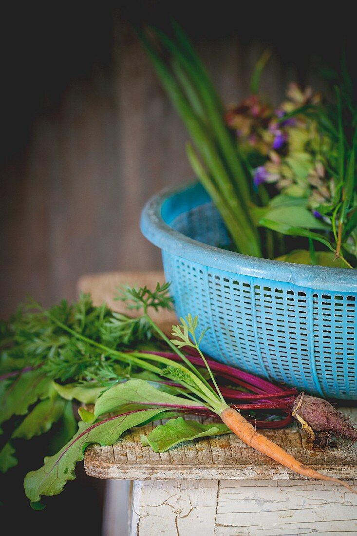 Young vegetables and herbs on an old wooden table