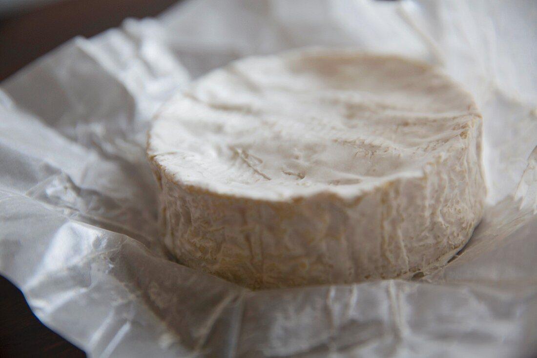 Französischer Brie auf Papier