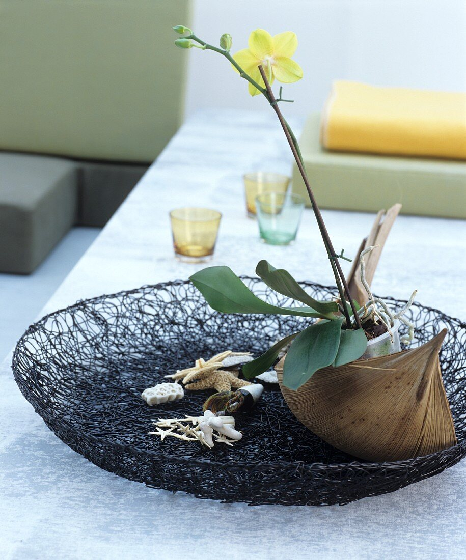 Oriental-style decorations: orchid, mussels and star fish in a shallow wire bowl
