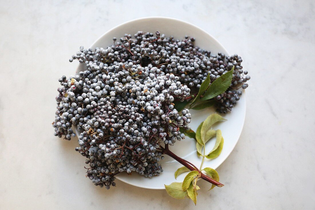 Elderberries with leaves on a plate (seen from above)