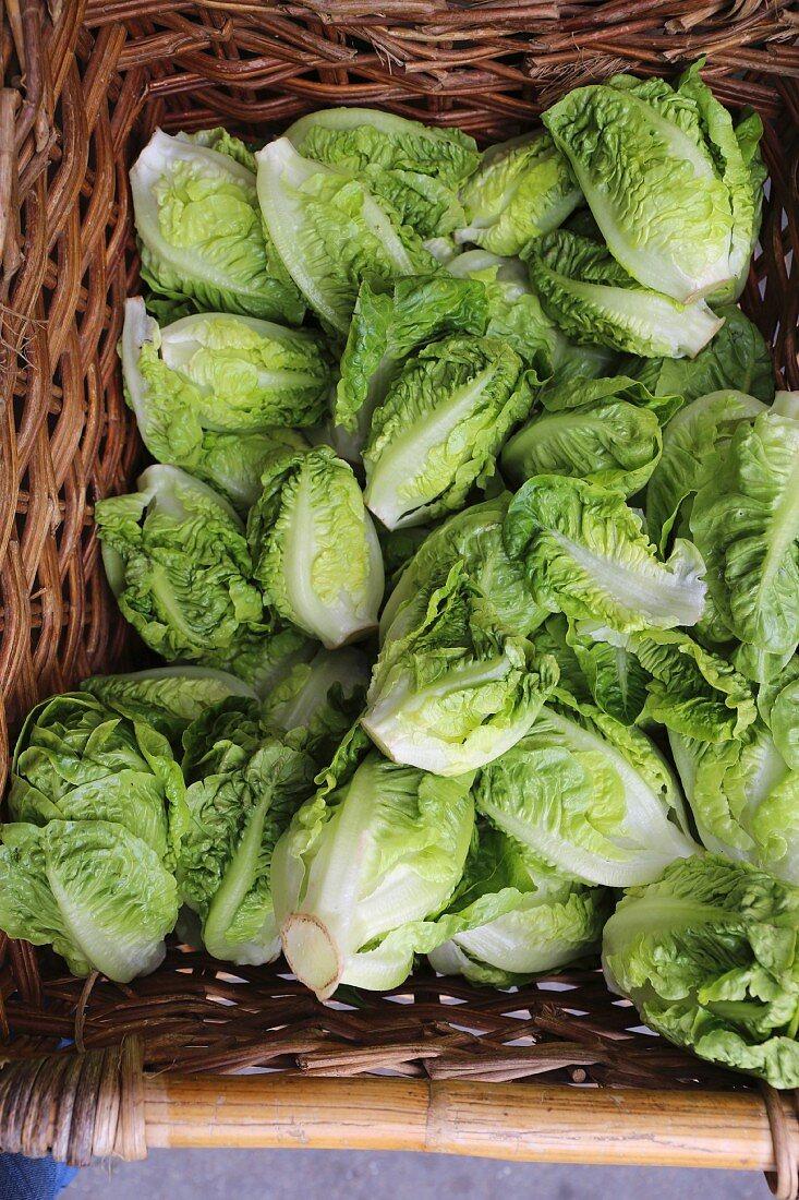 Organic little gem lettuces in a woven basket at a market