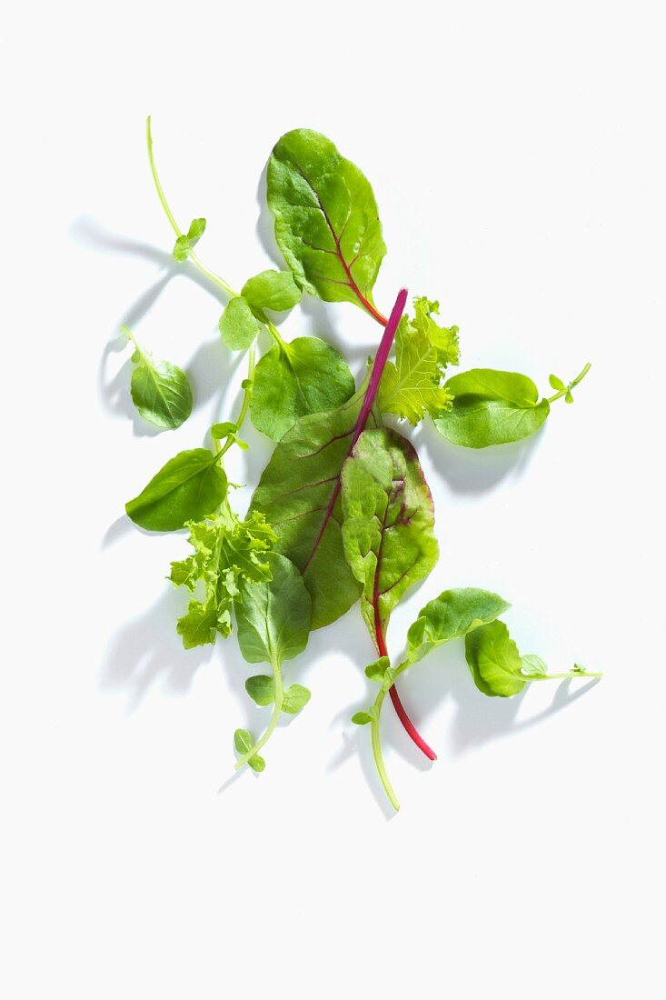 Wild herbs on a white surface