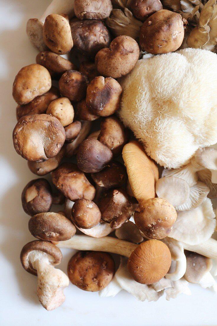 Maitake, shitake, piopinni, oyster and lion's mane mushrooms