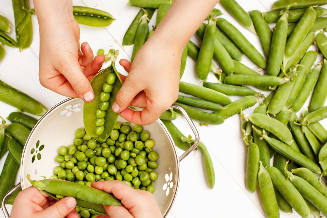 Peas being podded by two children