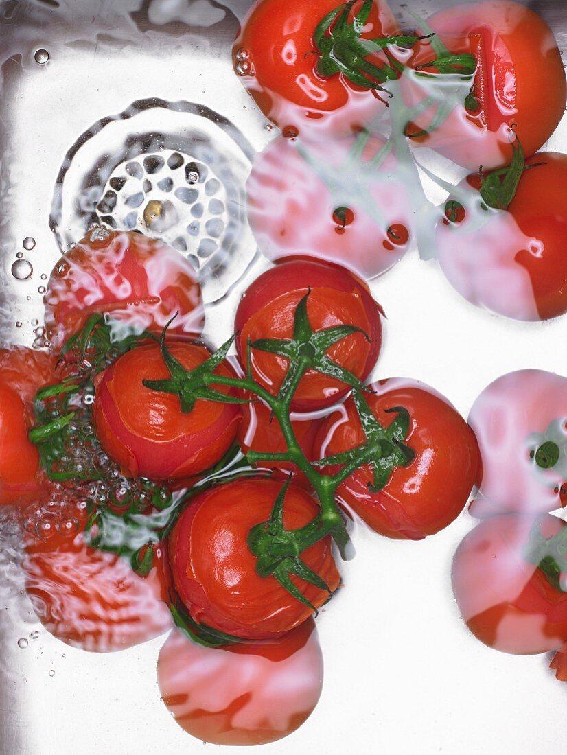 Tomaten im Waschbecken