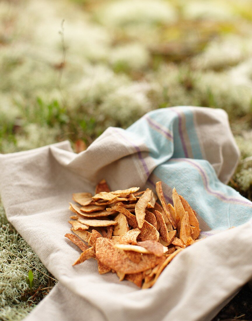 Dried apple slices on a cloth on a forest floor