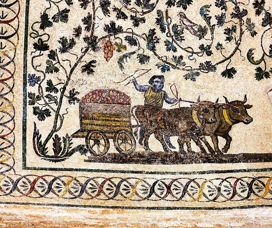 Roman Agriculture