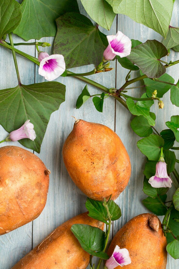 Süsskartoffeln mit Blättern und Blüten