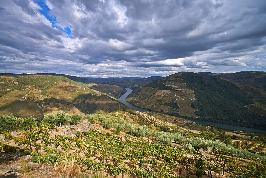 The winegrowing region by the Douro river in the Douro Valley in Portugal