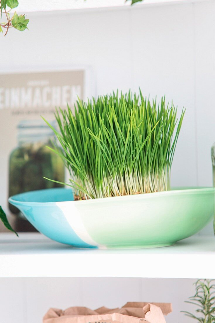 Fresh sprouts in a bowl on a kitchen shelf