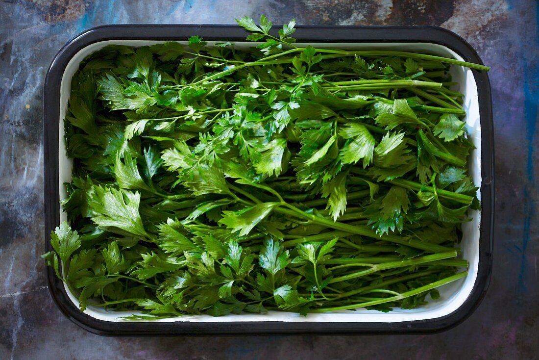 Fresh parsley in an enamel dish