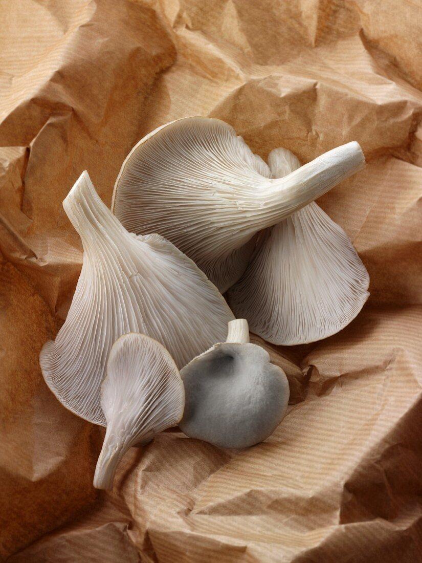 Freshly picked grey oyster mushrooms on brown paper