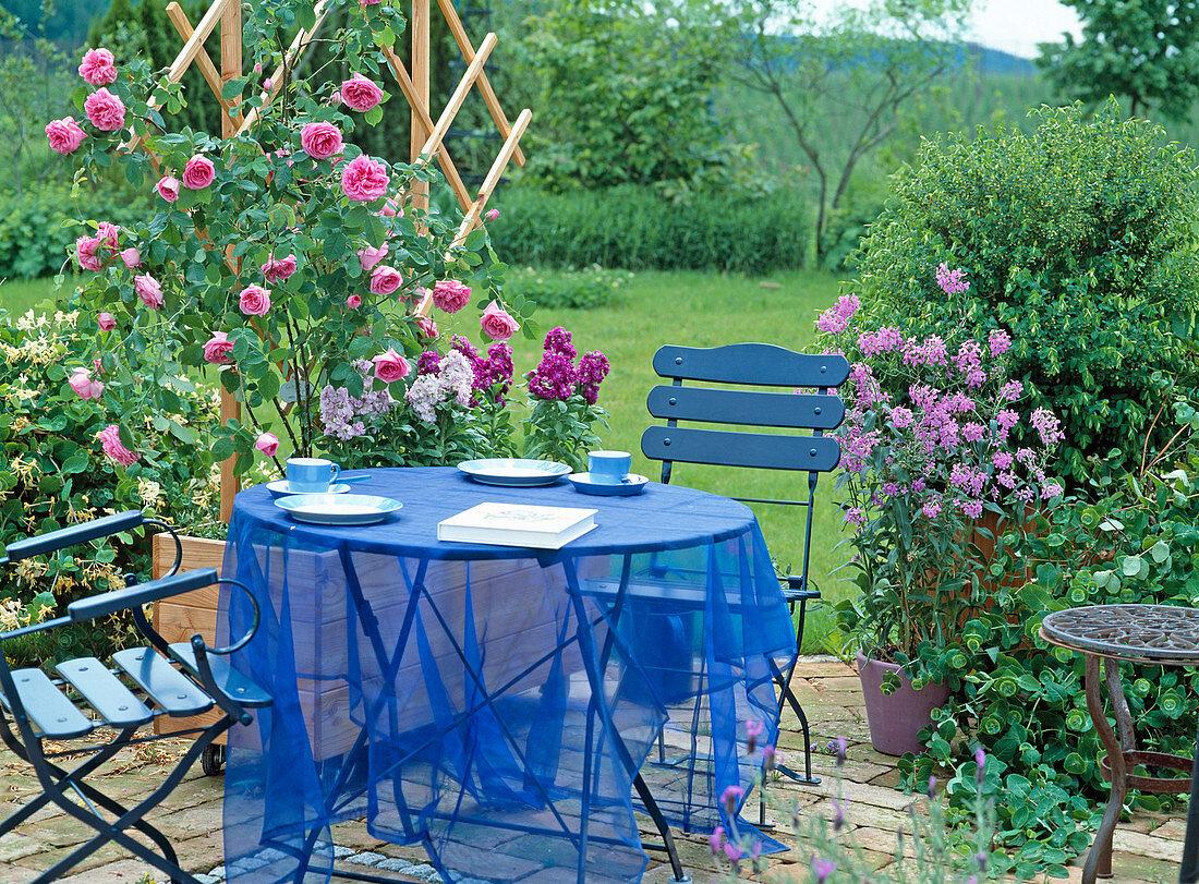Terrasse mit englische Rose 'Gertrude … – Bild kaufen – 20 ...