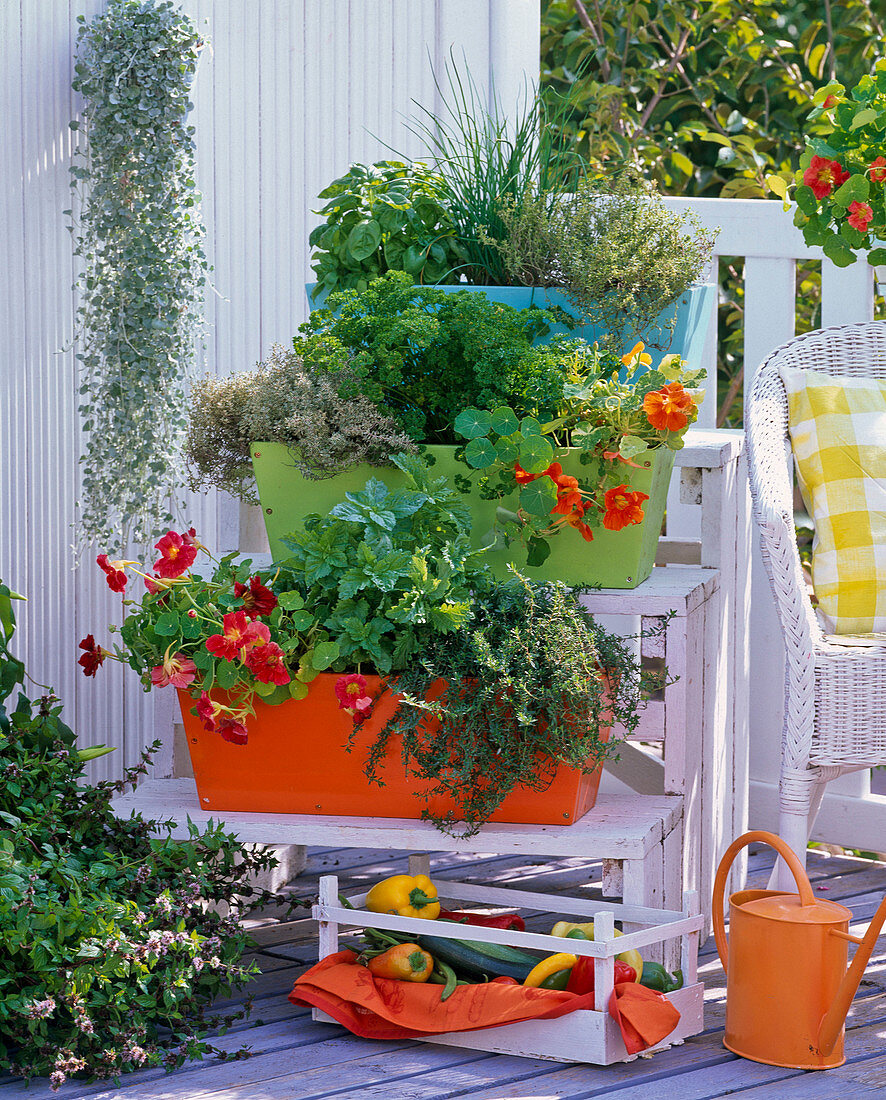 Herbs in orange, green and blue box on plant stairs