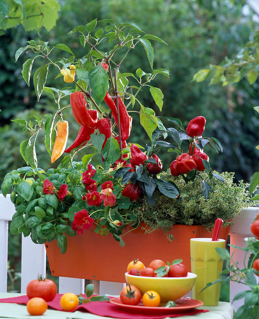 Vegetable box with paprika and herbs
