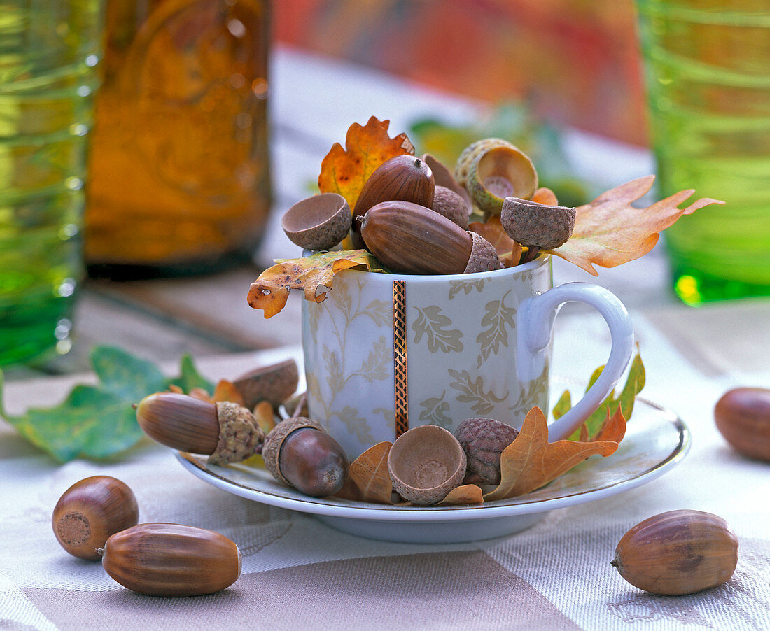 Quercus, leaves and acorns in and around espresso cup with oak motifs