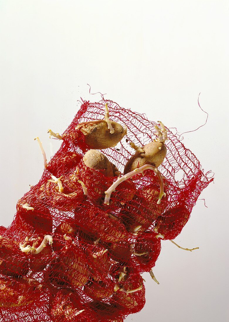 Potatoes in a Red Net Bag