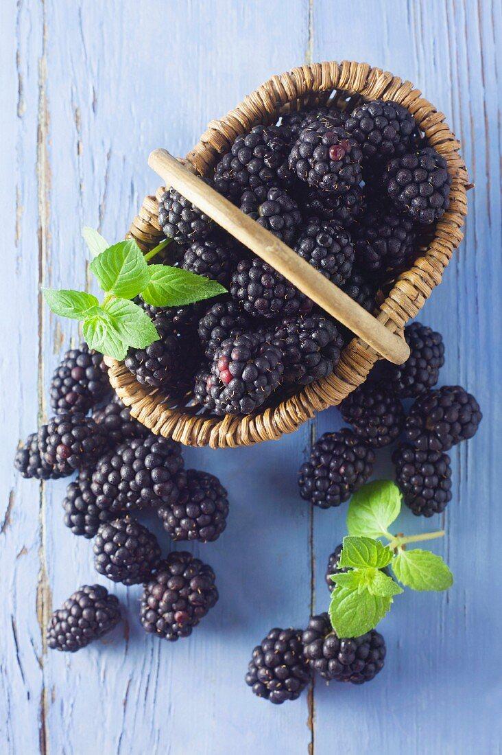Blackberries in a market basket on a blue wooden background