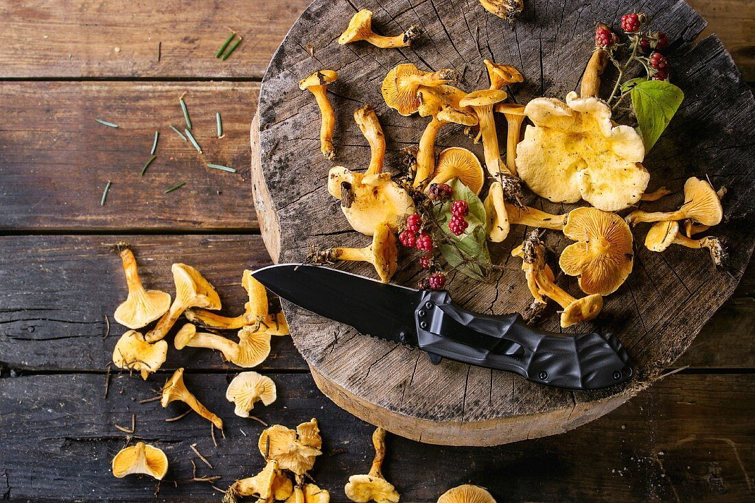 Forest Chanterelle mushrooms with wild raspberries and turist knife on wood stump