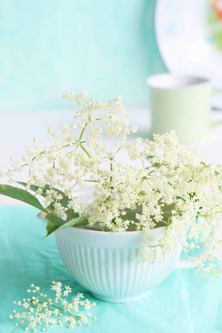 Fresh elderberry blossoms and leaves in a white bowl in front of a coffee cup and an enamel plate
