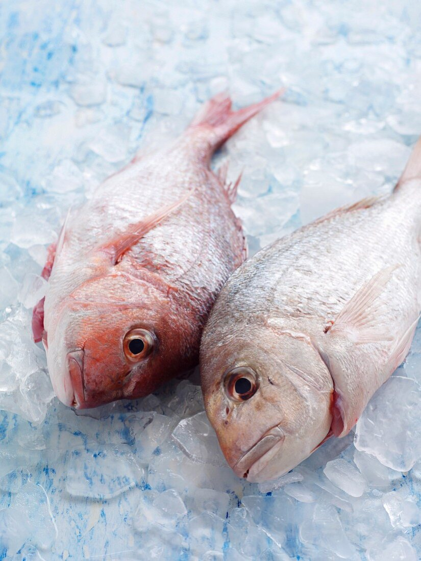Fresh Fish on ice cubes