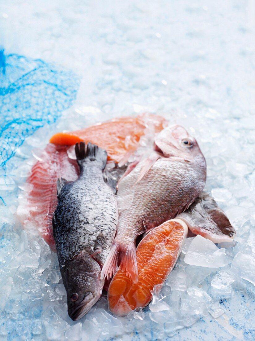 Verschiedene Fischsorten auf Eis