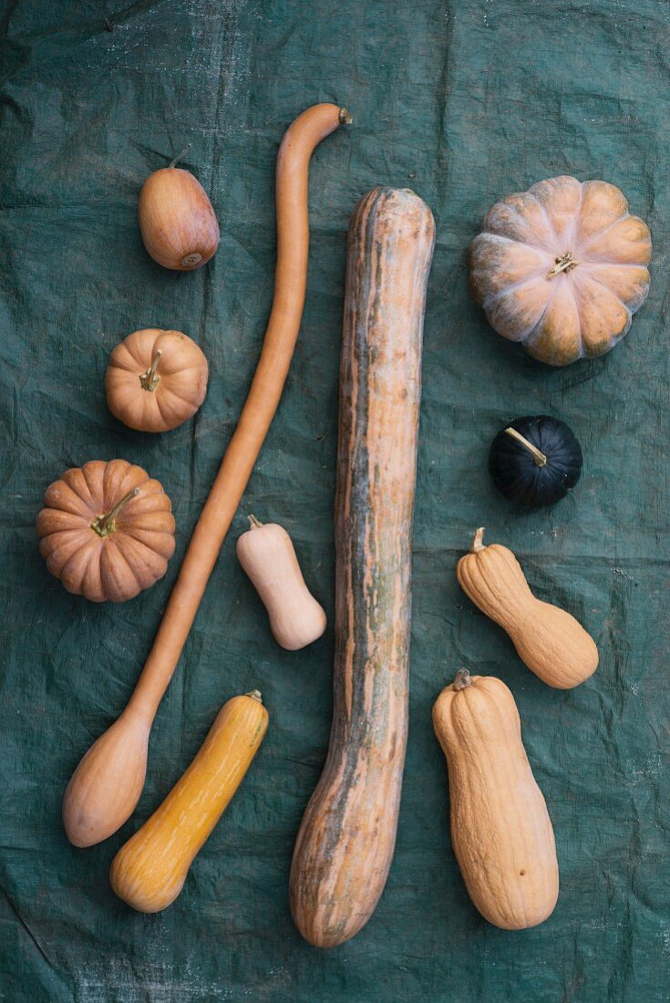 Musk and snake gourds
