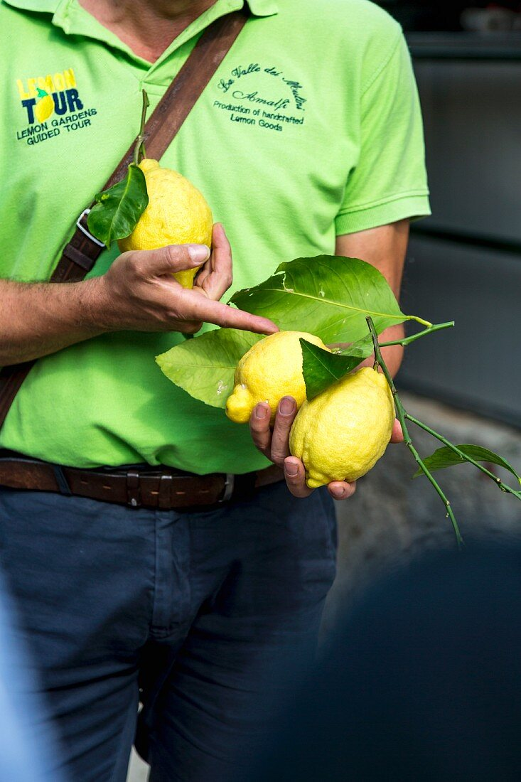 Führung im Zitronenhain, Aceto, Amalfiküste, Italien