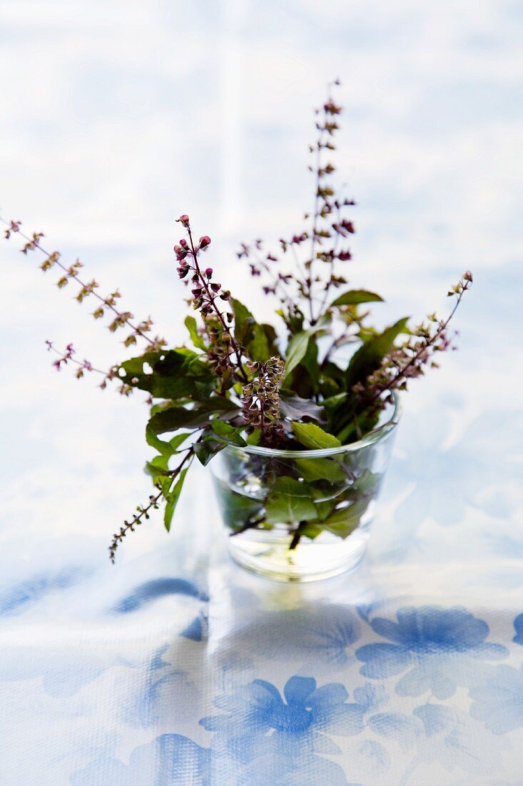 Flowering Indian basil in a glass
