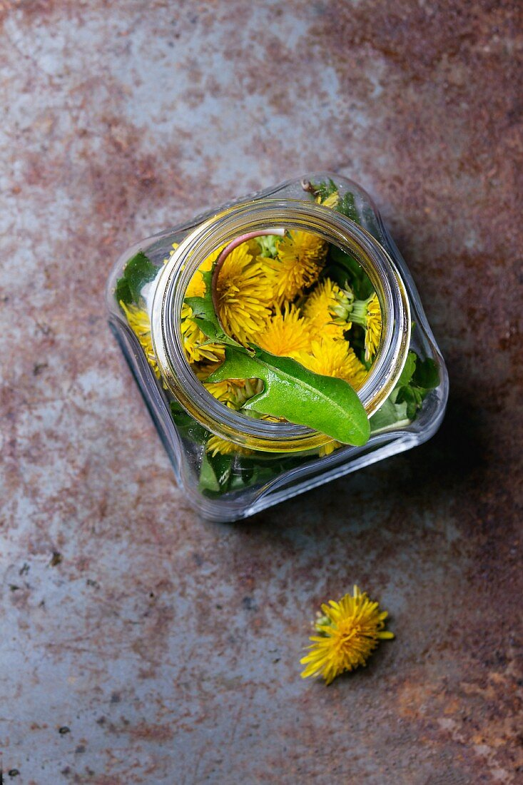 Dandelion leaves and flowers in jar on a rusty metal surface
