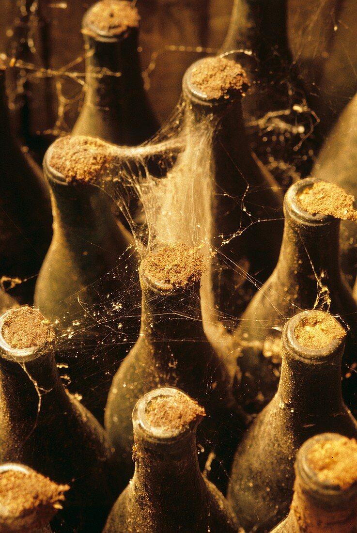 Vintage Wine Bottle with Cobwebs
