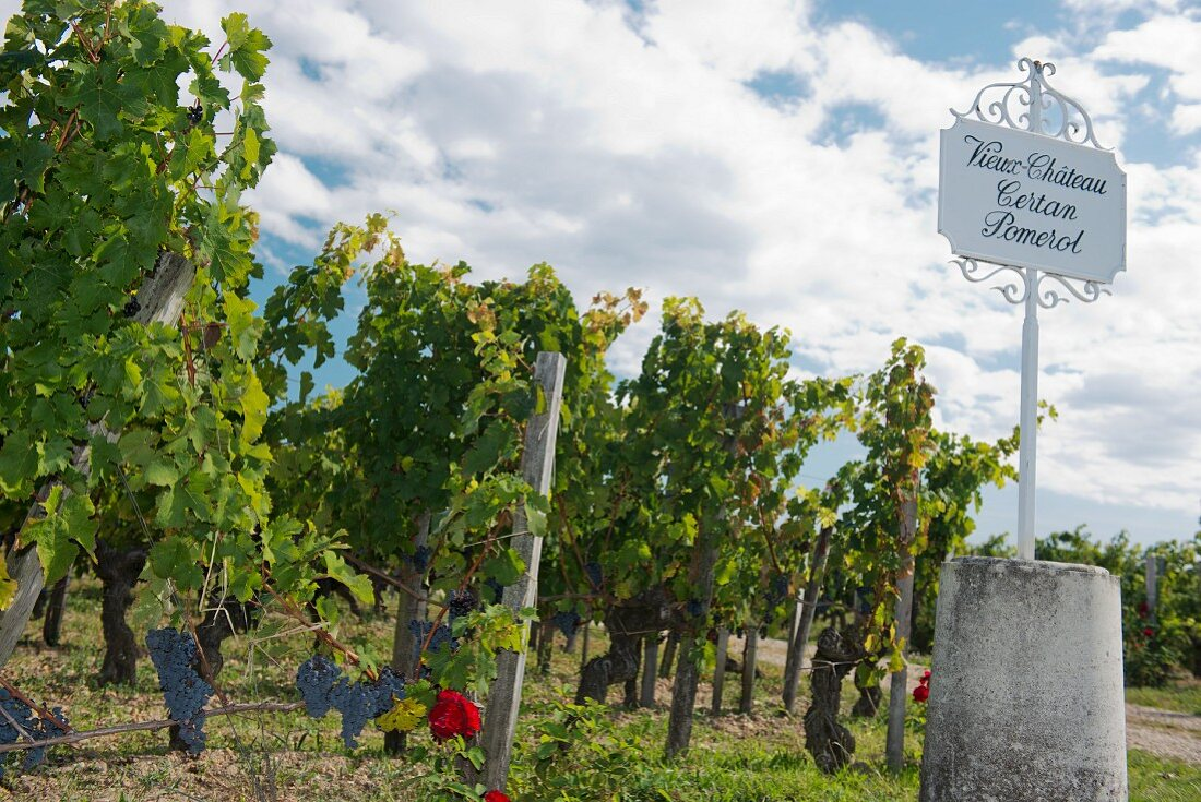 Grapevines and a white wrought iron sign, Bordeaux, France