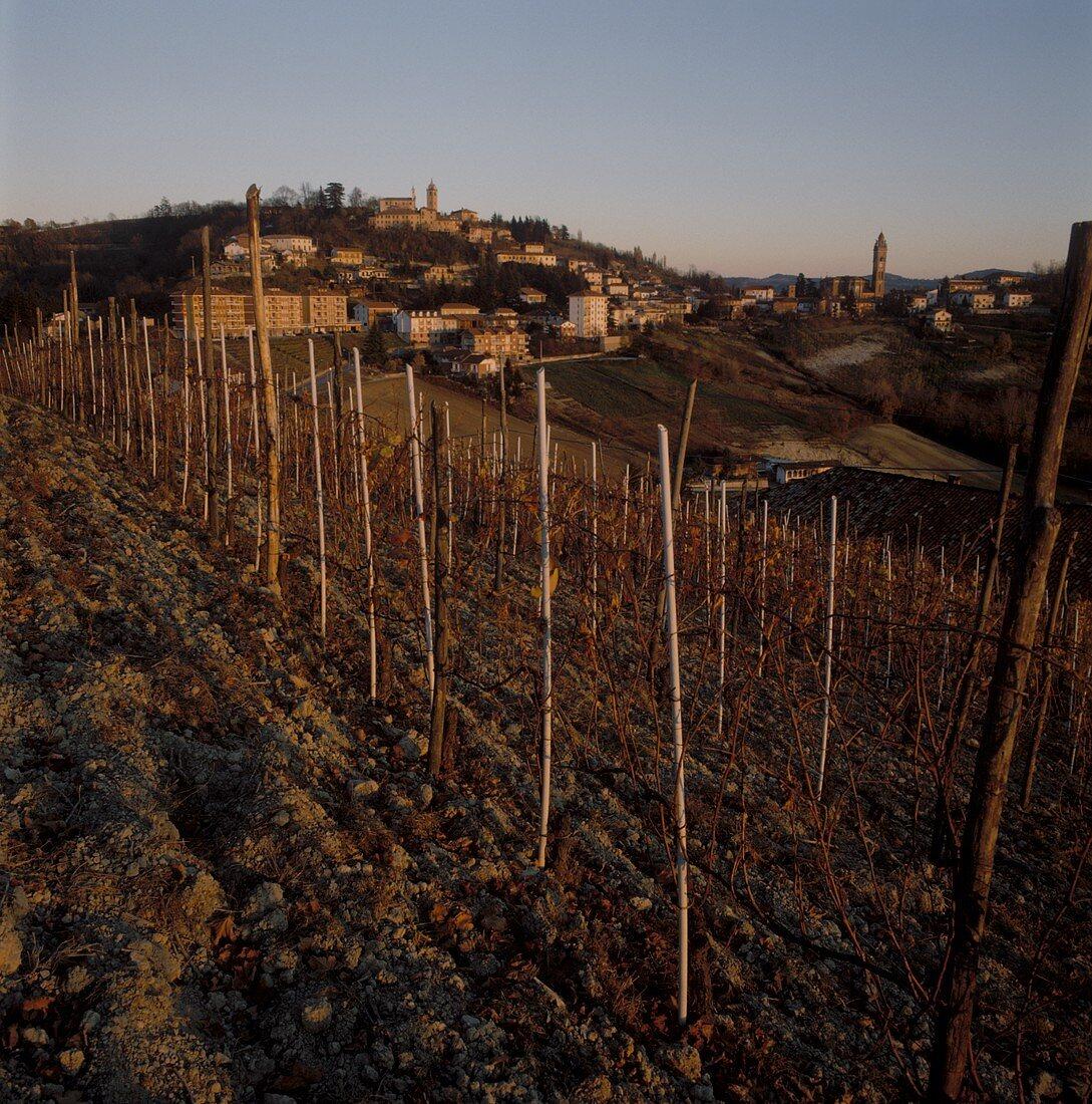 Autumnal Barolo vineyard in Piedmont, Italy