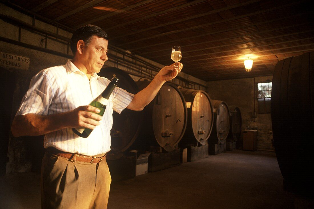 Renzo Varaschin examining Prosecco in his wine cellar, Italy