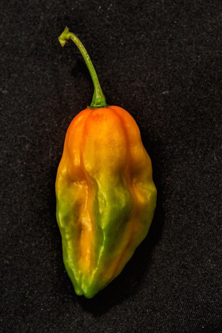 A Bhut Jolokia chilli (very spicy chilli pepper)