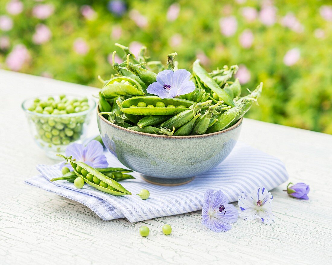 Green pea pods in a bowl on a garden table
