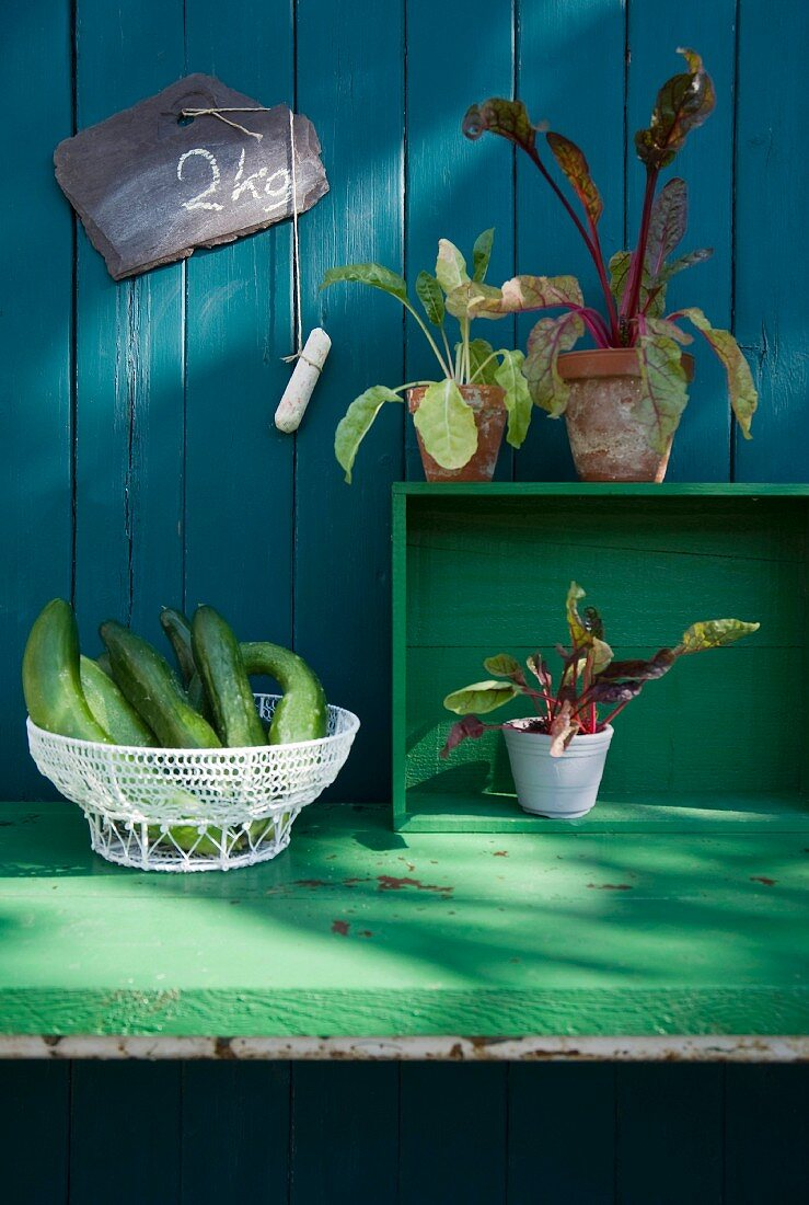 Cucumbers in a wire basket and chard plants in pots against a wooden wall with a slate board
