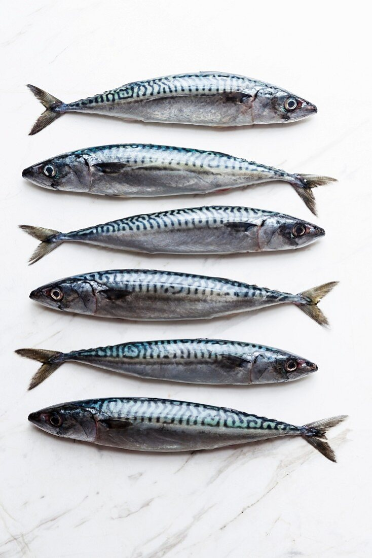 A row of six sardines on a white marble surface