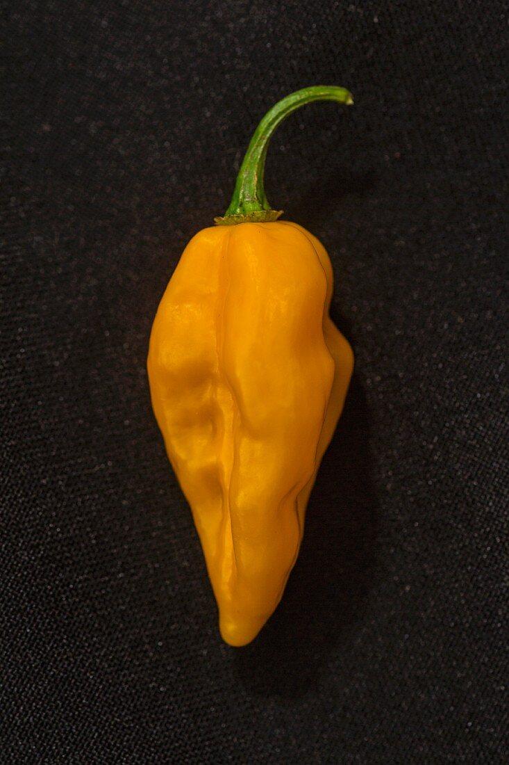 A Fatalii chilli pepper