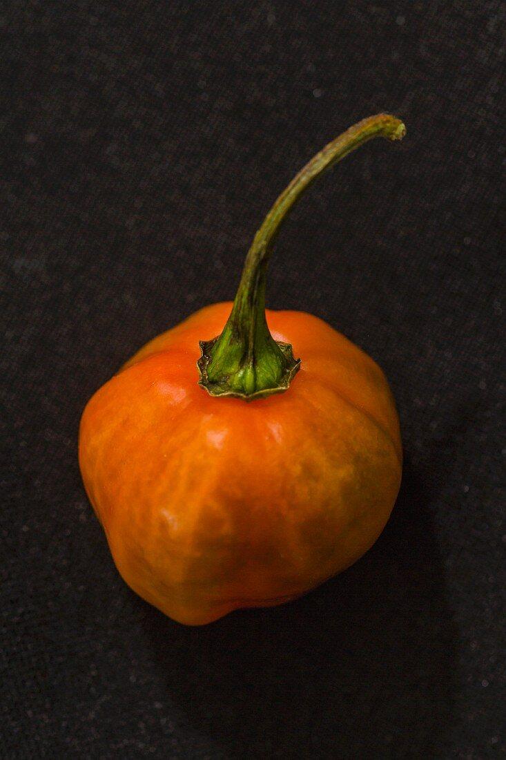 A red Habanero chilli pepper
