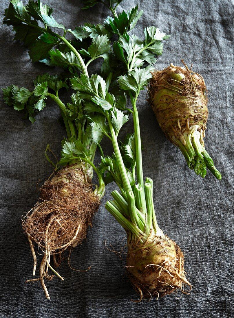 Three celery roots
