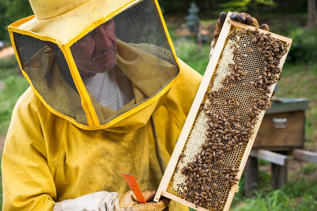 A beekeeper with a honeycomb with bees