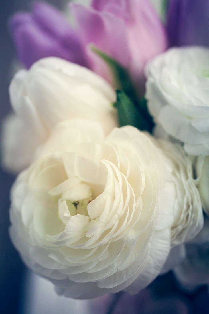 White roses and pink tulips for Valentine's Day
