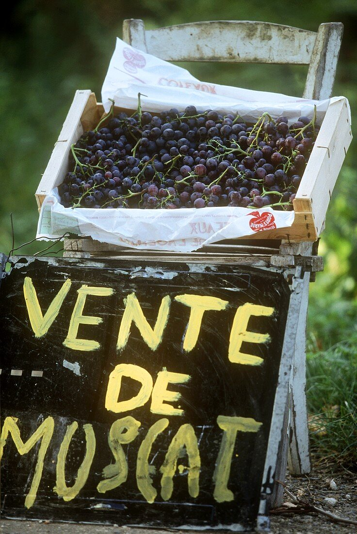 Muscat grapes on unusual stall, France