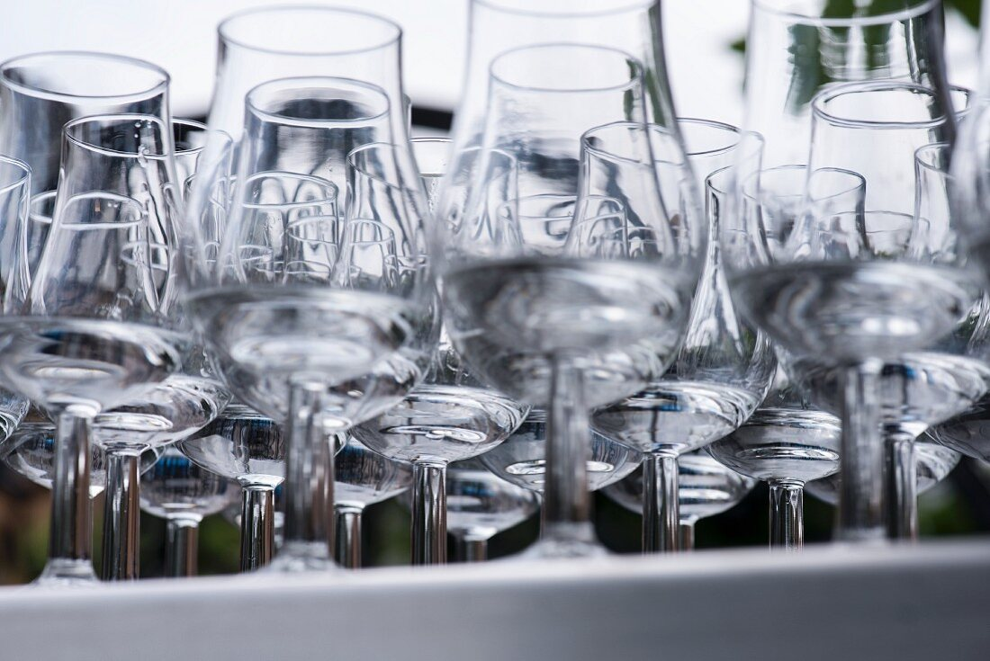 The view of a tray of tulip glasses containing Dutch gin from below