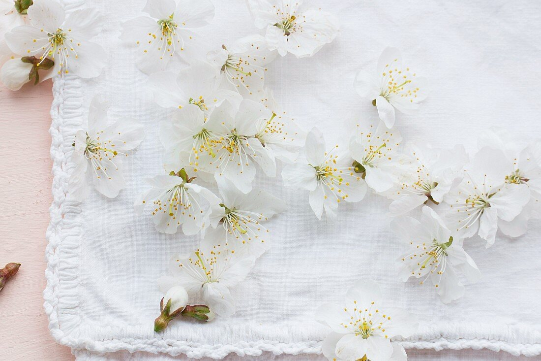 White blossom on white fabric with decorative hem